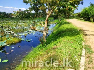 A Land for sale in Bellanwila
