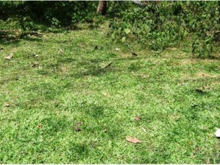 8 Perch Land for Sale Homagama
