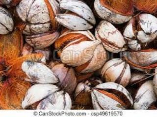 Coconut Husk(DC)