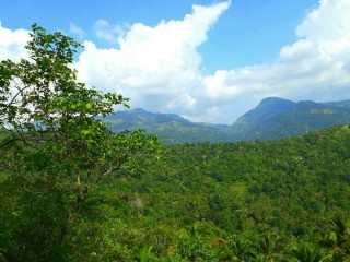 Land for sale suitable tourism (kandy-teldeniya)